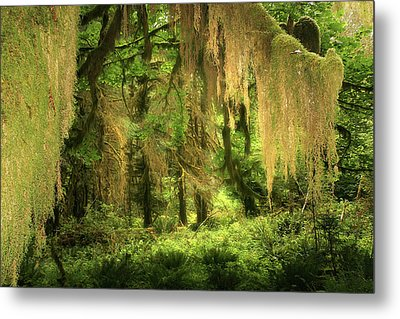 Forest Fantasy - Quinault - Gateway To Paradise On The Olympic Peninsula Wa Metal Print