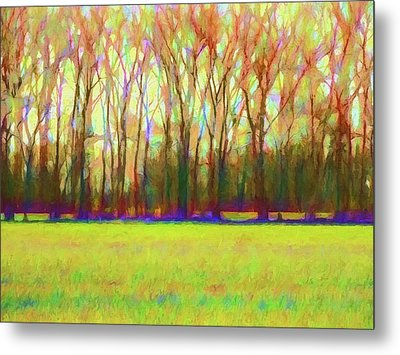 Forest In Autumn Light Metal Print