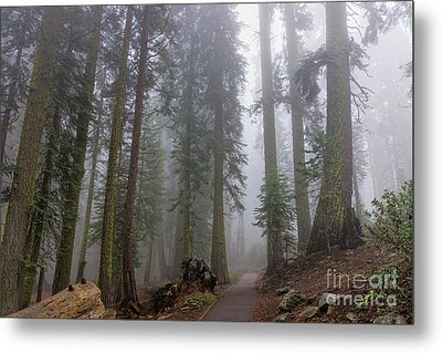 Metal Print featuring the photograph Forest Walking Path by Peggy Hughes