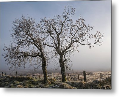 Metal Print featuring the photograph Forever Buddies Facing The Fog by Jeremy Lavender Photography
