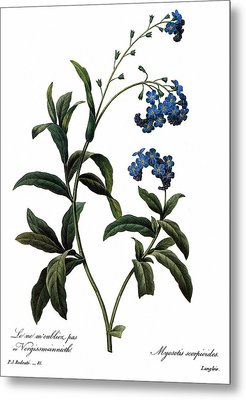 Forget-me-not Metal Print by Granger
