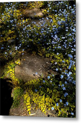 Metal Print featuring the painting Forget-me-nots 1 by Renate Nadi Wesley