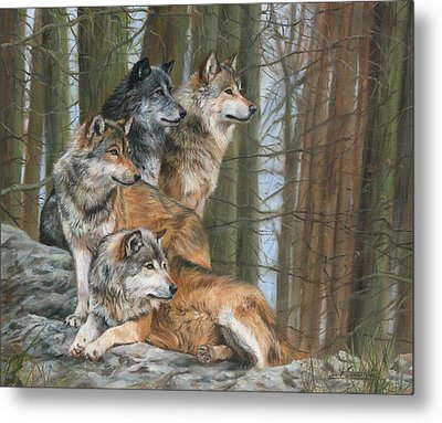Metal Print featuring the painting Four Wolves by David Stribbling