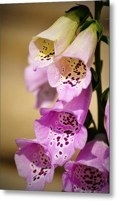 Fox Gloves Metal Print by Bill Cannon