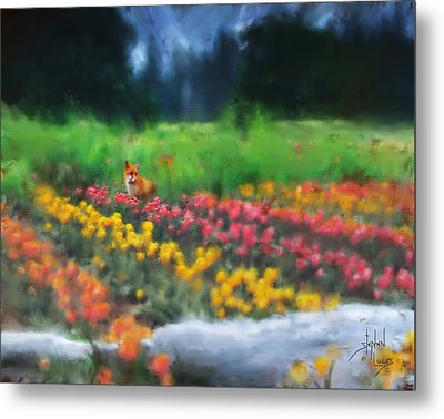 Fox Watching The Tulips Metal Print by Stephen Lucas