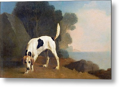 Foxhound On The Scent Metal Print by George Stubbs
