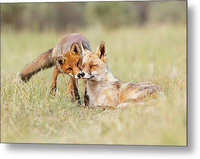Foxy Love - Mother Fox And Fox Kit Metal Print