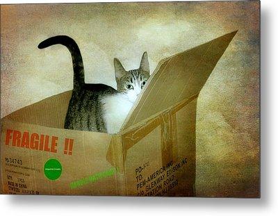 Fragile Shipment Metal Print