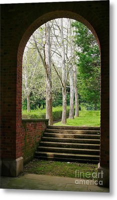 Framed Sycamores Metal Print by Susan Isakson