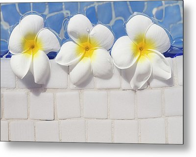 Frangipani Flowers Metal Print by Laura Leyshon