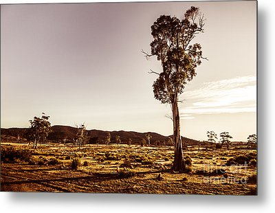 Freycinet Bushland Background Metal Print by Jorgo Photography - Wall Art Gallery