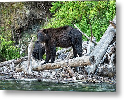 From The Great Bear Rainforest Metal Print