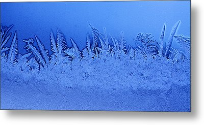 Frost Forest Metal Print by Thomas R Fletcher