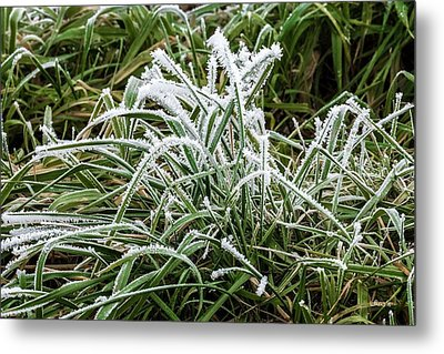 Frosted Grass Metal Print