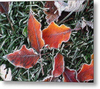 Metal Print featuring the photograph Frosted Leaves by Shari Jardina