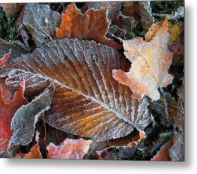 Metal Print featuring the photograph Frosted Painted Leaves by Shari Jardina