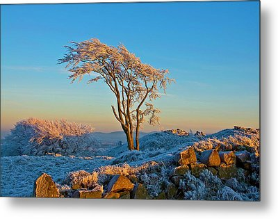 Frosted Tree Metal Print by Mark Denham