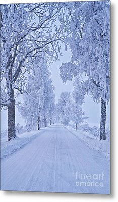 Frosted Trees Metal Print by Veikko Suikkanen