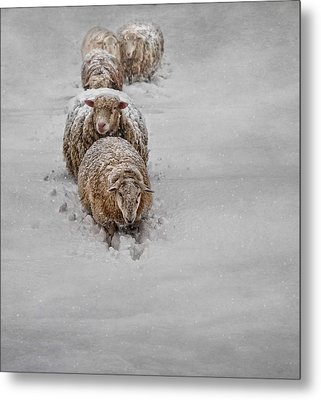 Frozen Fleece Metal Print by Robin-Lee Vieira