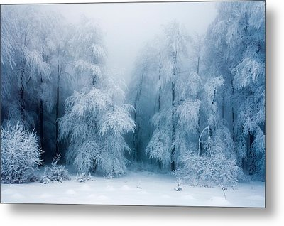 Frozen Forest Metal Print by Evgeni Dinev