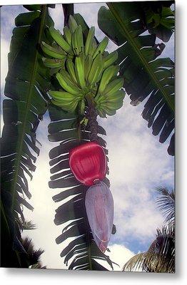 Fruitful Beauty Metal Print by Karen Wiles