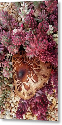 Fungus And Succulents Metal Print