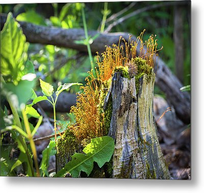 Metal Print featuring the photograph Fuzzy Stump by Bill Pevlor