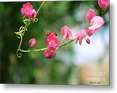 Metal Print featuring the photograph Garden Bug by Megan Dirsa-DuBois