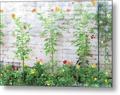Garden Florals Metal Print by Carolyn Dalessandro