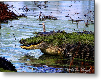 Metal Print featuring the photograph Gator Growl by Barbara Bowen