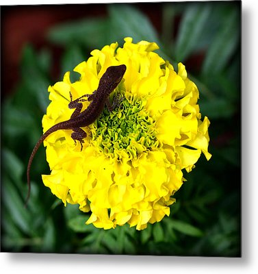 Gecko And Marigold Metal Print