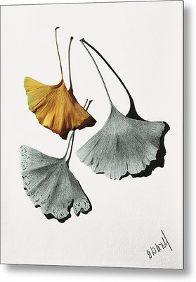 Ginkgo Leaves Metal Print by Garry McMichael
