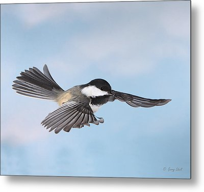 Metal Print featuring the photograph Gliding by Gerry Sibell