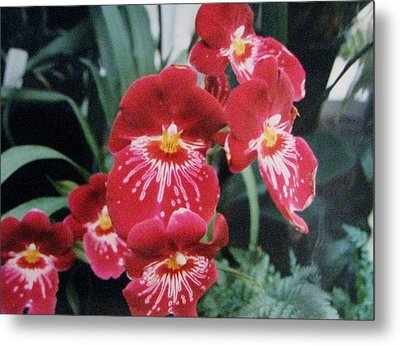 Glorious Fleur Metal Print by Judyann Matthews