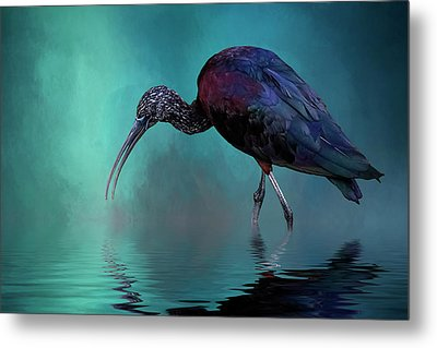Glossy Ibis Looking For Breakfast Metal Print by Cyndy Doty