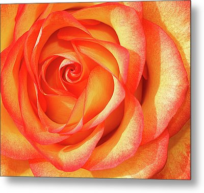 Metal Print featuring the photograph Gold And Red by Dawn Currie