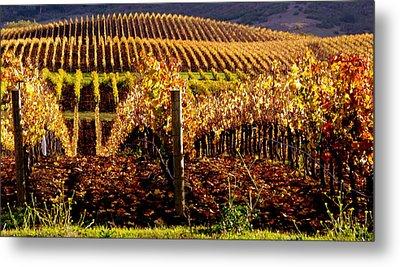 Golden Autumn Vineyard Metal Print by Jeff Lowe
