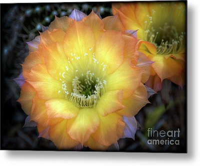Golden Cactus Bloom Metal Print