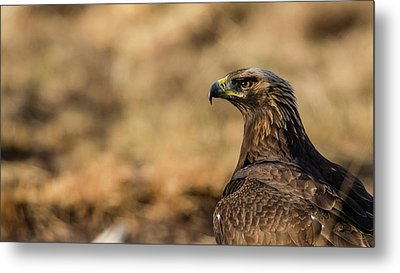 Metal Print featuring the photograph Golden Eagle by Torbjorn Swenelius