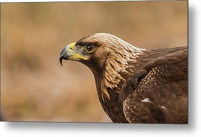 Metal Print featuring the photograph Golden Eagle's Portrait by Torbjorn Swenelius