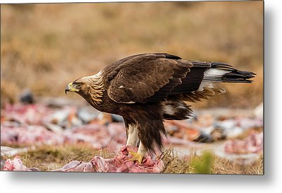 Metal Print featuring the photograph Golden Eagle's Profile by Torbjorn Swenelius