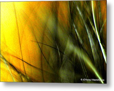 Golden Green Field Metal Print by JCYoung MacroXscape