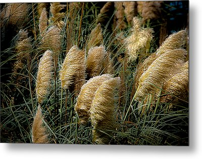 Golden Pampas In The Wind Metal Print by DigiArt Diaries by Vicky B Fuller