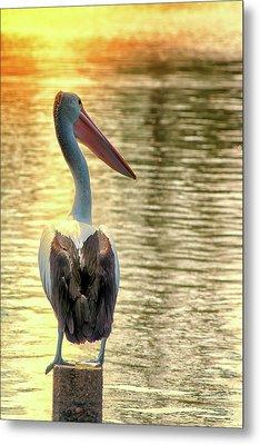 Golden Pelican Metal Print