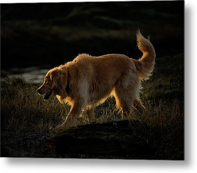 Metal Print featuring the photograph Golden by Randy Hall