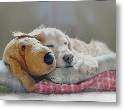 Golden Retriever Dog Sleeping With My Friend Metal Print