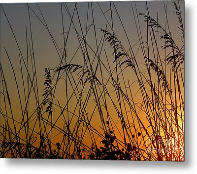Metal Print featuring the photograph Golden Sea Oats by Terri Mills