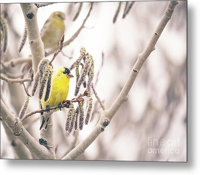Goldfinch Perch Metal Print