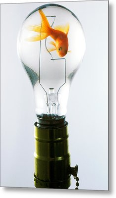 Goldfish In Light Bulb  Metal Print by Garry Gay