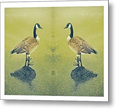 Goose In The Mirror Metal Print